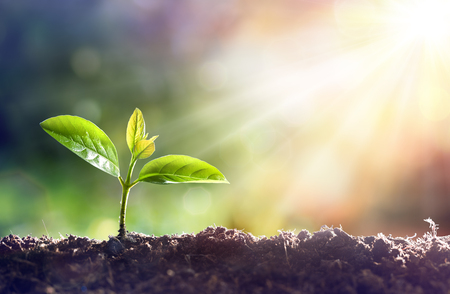 Photo pour Young Plant Growing In Sunlight - image libre de droit