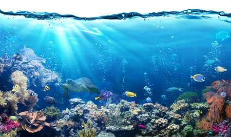 Photo pour Underwater Scene With Reef And Tropical Fish - image libre de droit