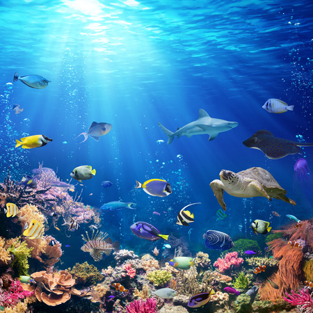 Foto de Underwater Scene With Coral Reef And Tropical Fish - Imagen libre de derechos