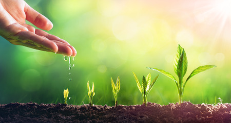 Photo pour Hand Watering Young Plants In Growing - image libre de droit