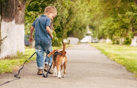 Photo pour Little boy walking with his beagle puppy better friend  - image libre de droit