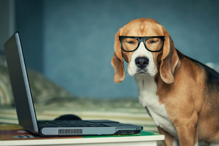 Foto de Sleepy beagle dog in funny glasses near laptop - Imagen libre de derechos