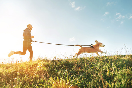 Photo pour Canicross exercises. Man runs with his beagle dog. Outdoor sport activity with pet - image libre de droit