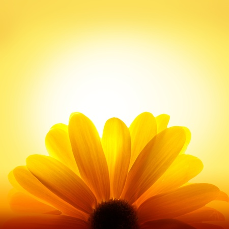 Photo for Macro shot of sunflower on yellow background - Royalty Free Image