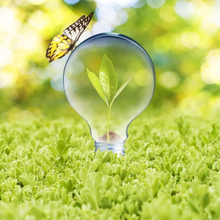 Foto de Light bulb on green grass and butterfly  Concept of Eco technology - Imagen libre de derechos