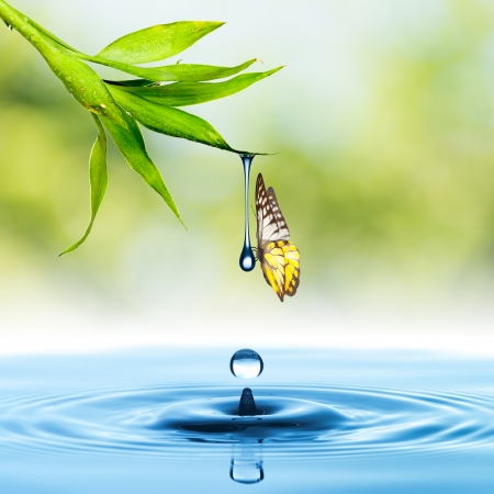 Foto de Butterfly with green leaf and water drop - Imagen libre de derechos