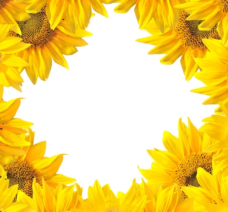 Photo for Sunflower nature summer background  - Royalty Free Image