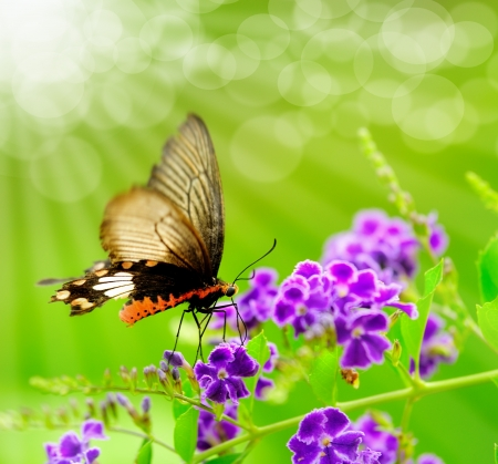 Foto de Butterfly on a flower with light reflect in morning - Imagen libre de derechos