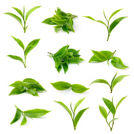 Photo pour green tea leaf isolated on white background - image libre de droit