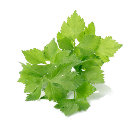 Photo for Celery on over white background - Royalty Free Image