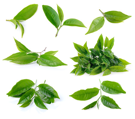 Photo pour set of green tea leaf isolated on white background - image libre de droit