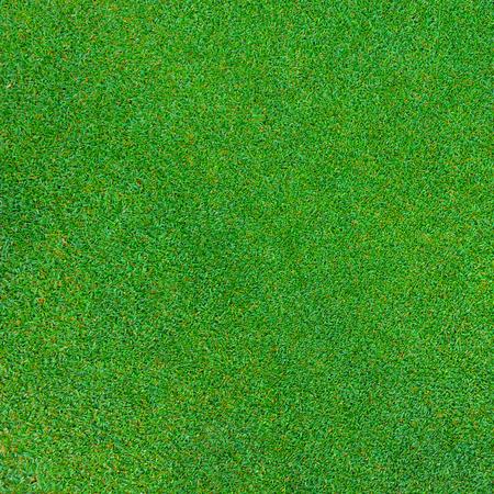 Photo pour green grass texture for background - image libre de droit