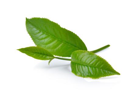 Foto de green tea leaf isolated on white background - Imagen libre de derechos