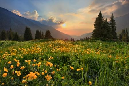 Foto de Glade of buttercups at sunset in mountains Tien-Shan, Kazakhstan - Imagen libre de derechos