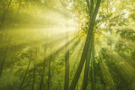 Photo for Rays of sunlight and Green Forest - Royalty Free Image