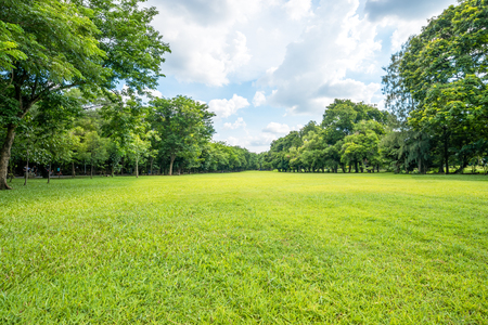 Photo pour Beautiful park scene in public park with green grass field, green tree plant and a party cloudy blue sky - image libre de droit