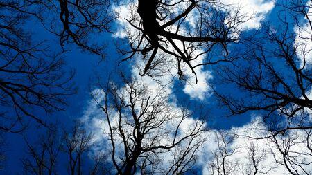 Foto de Bare trees in winter with blue sky - Imagen libre de derechos