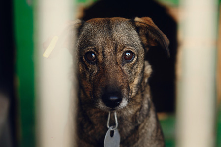 Photo for sad looking eyes of puppy in shelter cage, unhappy emotional moment, adopt me concept, space for text - Royalty Free Image