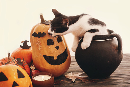 Photo for Happy Halloween concept. Pumpkins, jack-o-lantern, cat sitting in witch cauldron, bats, spider, candle, autumn leaves on black wood in light. Space for text. Season's greeting - Royalty Free Image
