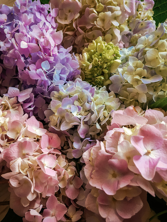 Photo for Hydrangea beautiful colorful bouquet top view. Pink, green, blue Hydrangeas flowers, colorful floral pattern. Hello spring - Royalty Free Image