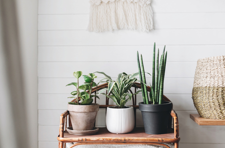 Foto de Stylish green plants in pots on wooden vintage stand on background of white rustic wall with embroidery hanging. Peperomia, sansevieria, dracaena plants, modern room decor, boho bedroom - Imagen libre de derechos