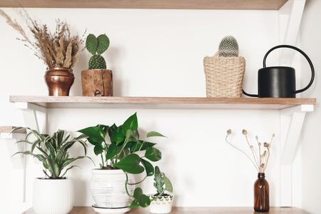 Foto de Stylish wooden shelves with green plants, black watering can, boho wildflowers. Modern hipster room decor. Cactus, epipremnum pothos, dracaena flower pots on shelf - Imagen libre de derechos