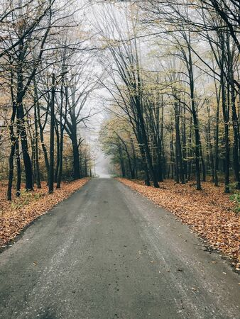 Photo for Autumn road in woods with fall leaves in foggy cold morning. Mist in autumn forest with yellow leaves. Tranquil moment. Atmospheric morning. Hello fall - Royalty Free Image