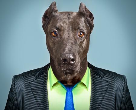 Foto de Portrait of a dog in a business suit - Imagen libre de derechos