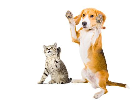 Photo pour Portrait of a kitten and dog with raised legs - image libre de droit