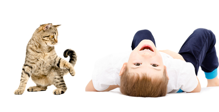Portrait of a cheerful boy and playful cat Scottish Straight, isolated on white background
