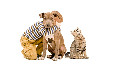 Photo for Loving boy hugging pit bull puppy and a cat, isolated on white background - Royalty Free Image