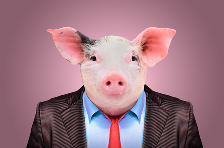 Photo pour Portrait of a pig in a business suit on a pink background - image libre de droit