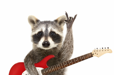 Photo for Portrait of a funny raccoon with electric guitar, showing a rock gesture, isolated on white background - Royalty Free Image