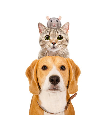 Photo for Funny portrait of pets isolated on white background - Royalty Free Image