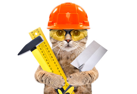 Foto de Portrait of a builder cat with tools in paws - Imagen libre de derechos