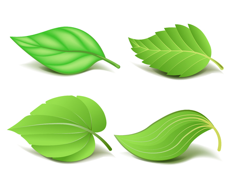 Ilustración de Collection of Realistic Green Leaves Set. Vector - Imagen libre de derechos