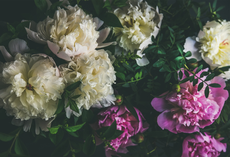 Photo pour Natural floral pattern, texture and background. White and pink peony flowers over dark background, top view, selective focus. Summer, Valentines or Woman s day greeting card - image libre de droit