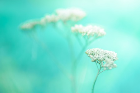 Foto de Natural background with dry flower stems. Blue blurred backdrop, autumn time - Imagen libre de derechos