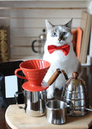 Foto de White blue-eyed cat barista in a red bow tie. Alternative coffee brewing. Pack with empty label, space for design - Imagen libre de derechos