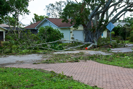 Photo pour View of downed trees in front of house and hurricane irma damage in florida. - image libre de droit