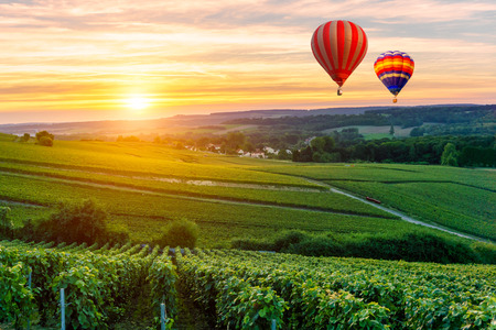 Photo for Colorful hot air balloons flying over champagne Vineyards at sunset montagne de Reims, France - Royalty Free Image