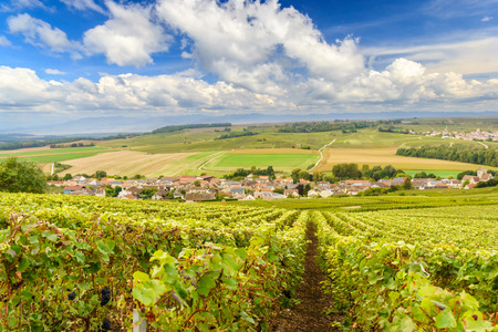 Photo for Scenic landscape in the Champagne, Vineyards in the Montagne de Reims, France - Royalty Free Image