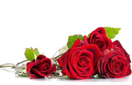Photo for Red rose - Royalty Free Image