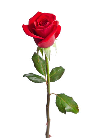 Photo pour beautiful red rose isolated on white background - image libre de droit