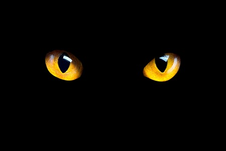 Photo pour Orange cat eyes glow in the dark on a black background. - image libre de droit