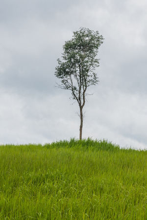 Photo pour A natural green grass and tree texture background. - image libre de droit