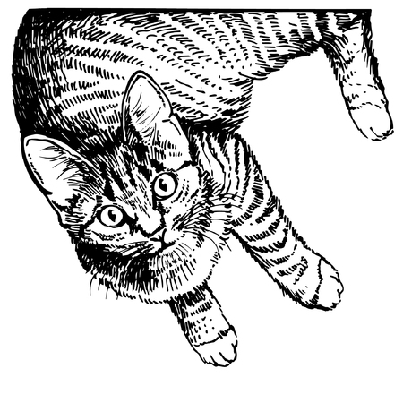 Illustrazione per Hand drawing cat. Sketch kitten, kitty. Top view - Immagini Royalty Free