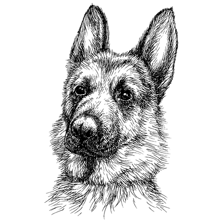 Illustration pour Sketch Portrait of a beautiful German Shepherd. German sheepdog head freehand drawing - image libre de droit