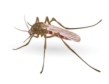 Mosquito. Vector illustration.