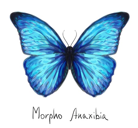 Illustration for Butterfly Morpho Anaxibia  Watercolor imitation  - Royalty Free Image